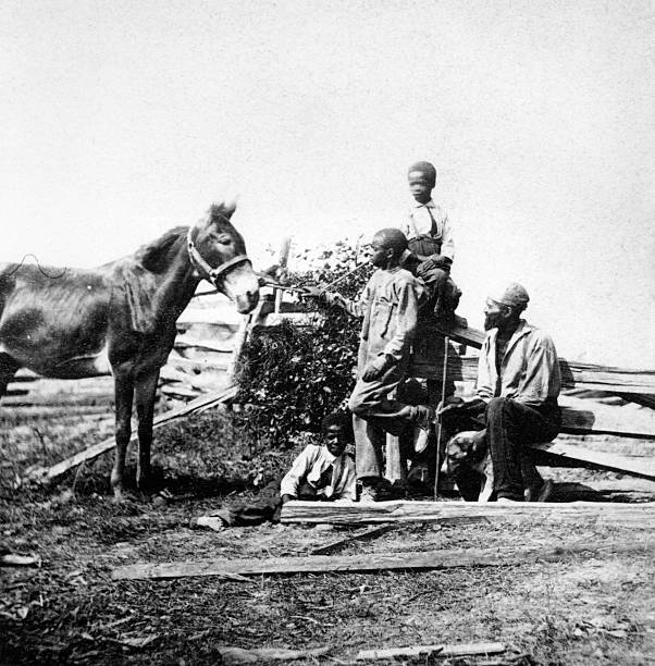 Slaves in a field with a horse during the US civil...