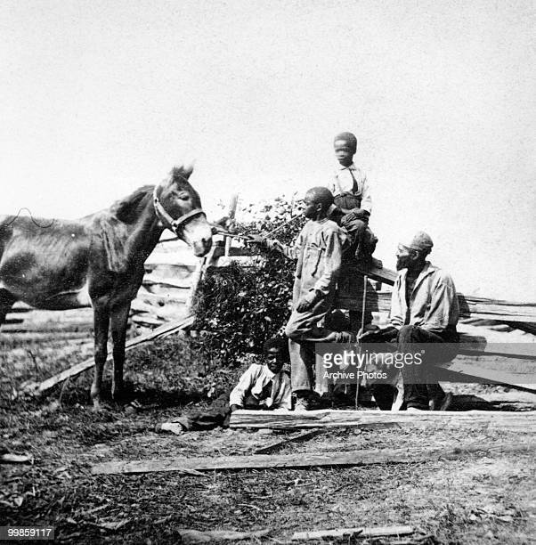Slaves in a field with a horse during the US civil war circa 1861