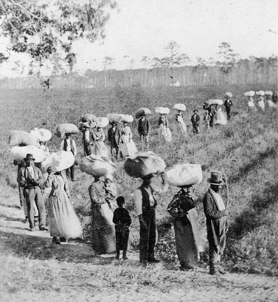 Slaves Returning from the Cotton fields in South Carolina...