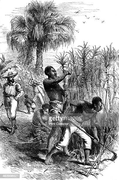 Slaves working on a plantation c1880 A print from Cassell's History of the United States by Edmund Ollier Volume II Cassell Petter and Galpin London...