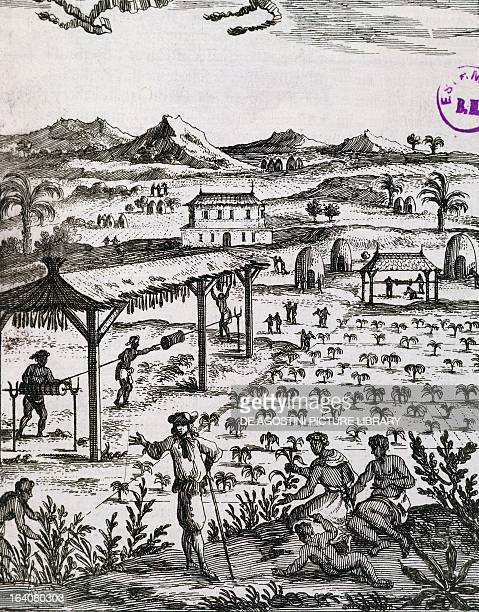 Slaves working on a tobacco plantation in the Caribbean engraving from the Description de L'Universe by Alain Manesson Mallet Paris 1683 Antilles...