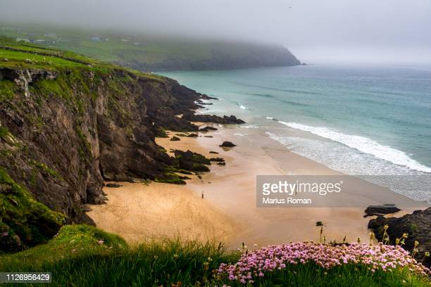 slea head beach on a foggy day, dingle peninsula, county kerry, munster province, ireland. - county waterford ireland stock pictures, royalty-free photos & images