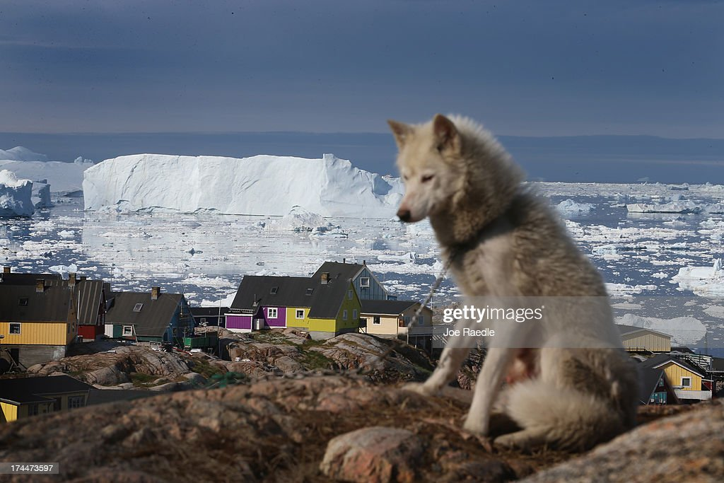 A sled dog is seen as icebergs that broke off from the Jakobshavn Glacier are in the water on July 17, 2013 in Ilulissat, Greenland. As Greenlanders adapt to the changing climate and go on with their lives, researchers from the National Science Foundation and other organizations are studying the phenomena of the melting glaciers and its long-term ramifications for the rest of the world. In recent years, sea level rise in places such as Miami Beach has led to increased street flooding and prompted leaders such as New York City Mayor Michael Bloomberg to propose a $19.5 billion plan to boost the citys capacity to withstand future extreme weather events by, among other things, devising mechanisms to withstand flooding.