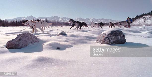 sled dog race - mt mckinley stock photos and pictures