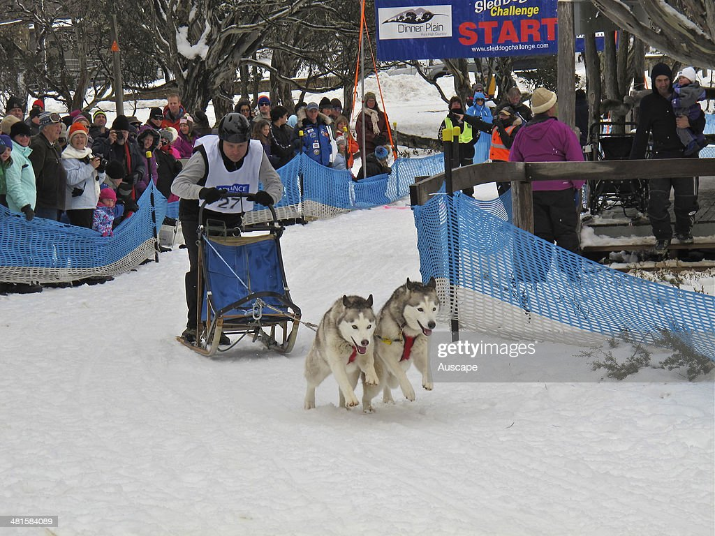 Sled dog race with single sled pulled by a pair of Husky