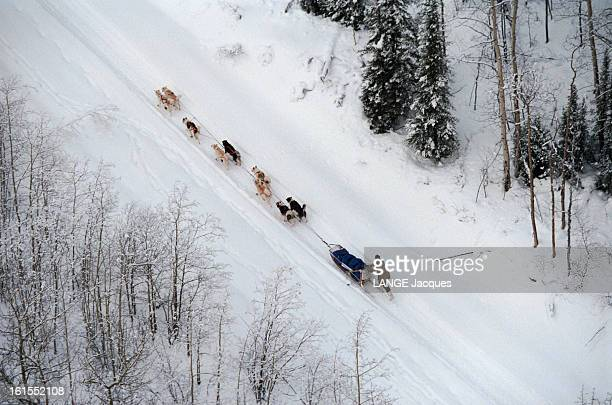 Sled Dog Races In Yukon Quest In Alaska Février 1997 ALASKA ETATSUNIS Le français Nicolas VANIER participe pour la première fois à La 'Yukon Quest'...