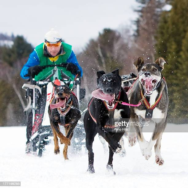 CONTENT] Sled dog racing is a winter dog sport most popular in the Arctic regions of the United States Canada Russia and some European countries It...
