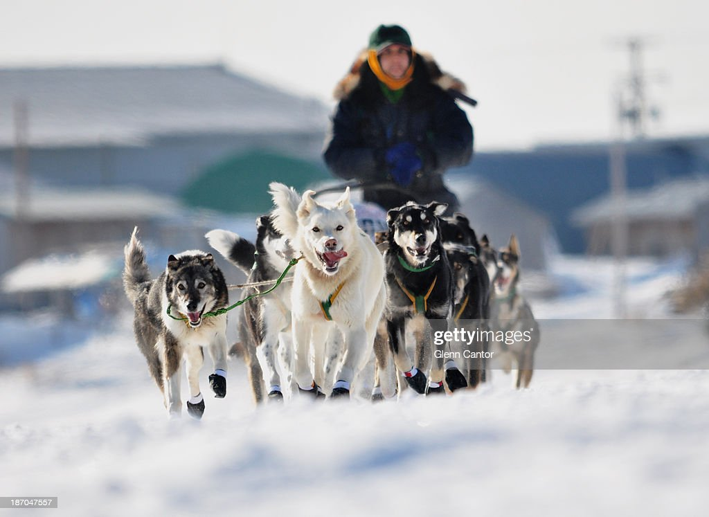 Sled dog team and musher : News Photo