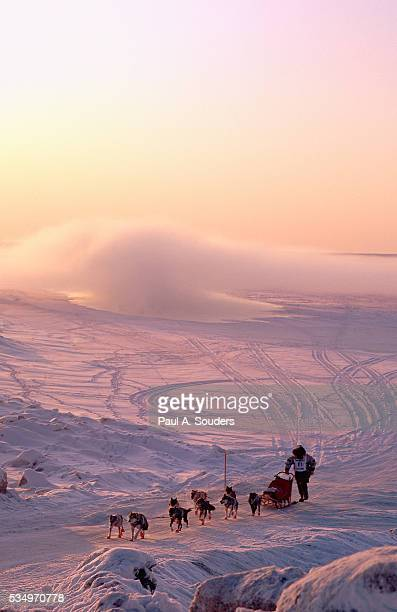 sled dog team running iditarod - iditarod stock pictures, royalty-free photos & images
