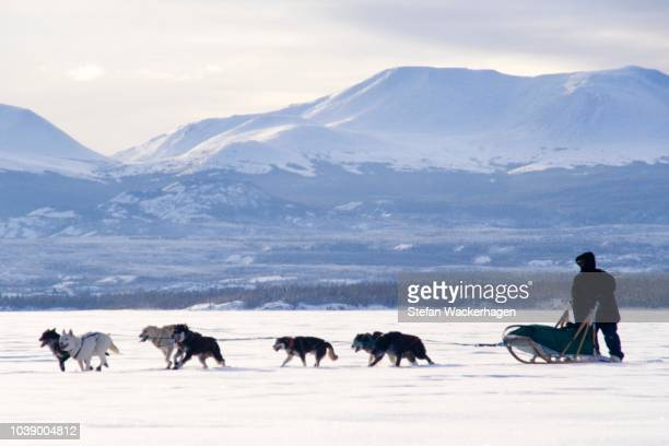 sled dog team with musher, lake laberge, yukon territory, canada - vista lateral stock pictures, royalty-free photos & images