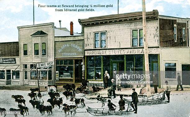 Sled dogs and their drivers ready to go is the subject of this postcard made around 1910 in an Seward Alaska