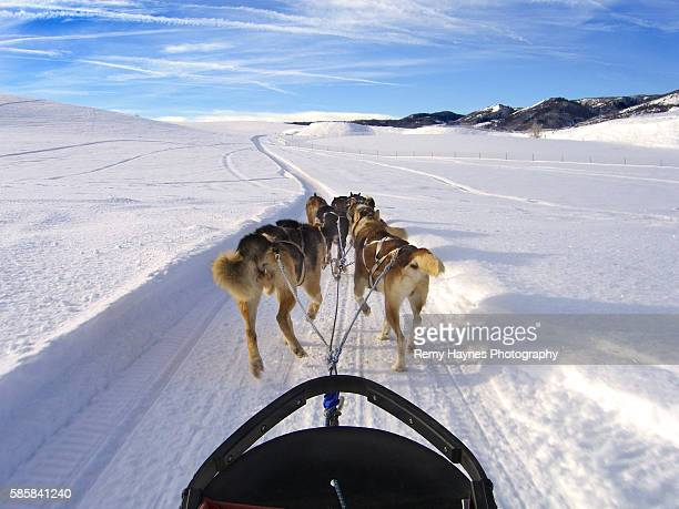 sled dogs pulling slay in snowy colorado - steamboat springs colorado stock photos and pictures