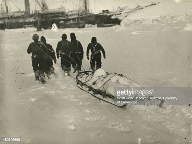Sledging in fresh ice to the 'Endurance' for the ship's water during the Imperial TransAntarctic Expedition 191417 led by Ernest Shackleton