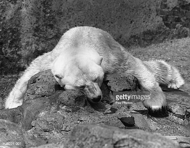 sleeping bear - 1961 stock pictures, royalty-free photos & images