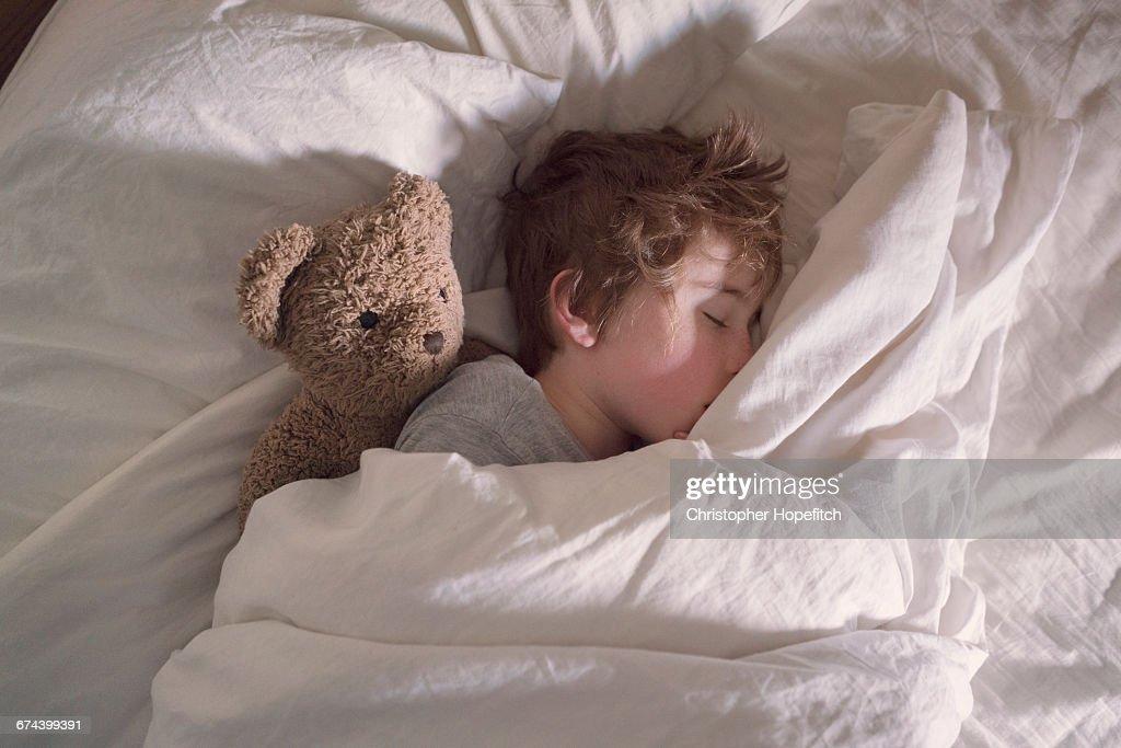 Sleeping boy with teddy bear : Stock Photo