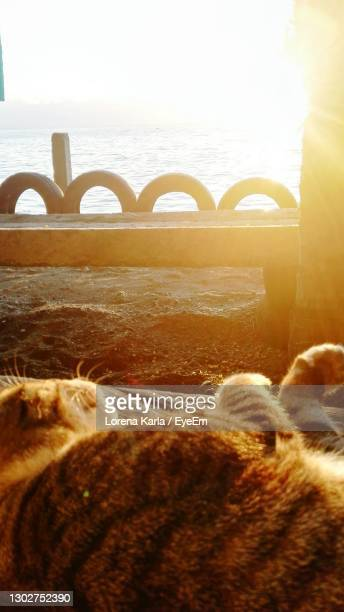 sleeping cat on beach against sky during sunset - lorena day stock pictures, royalty-free photos & images