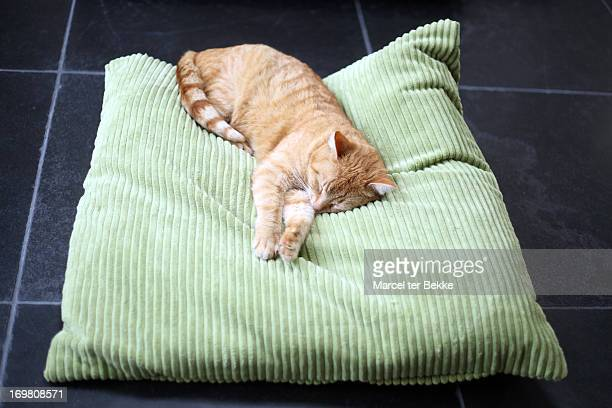 sleeping cat on cushion - cushion stock photos and pictures