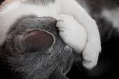 beautiful aegean cat sleeping tight hugging