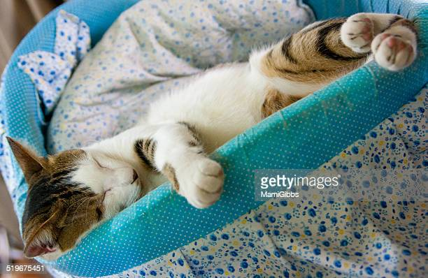 sleeping cat - mamigibbs stock photos and pictures