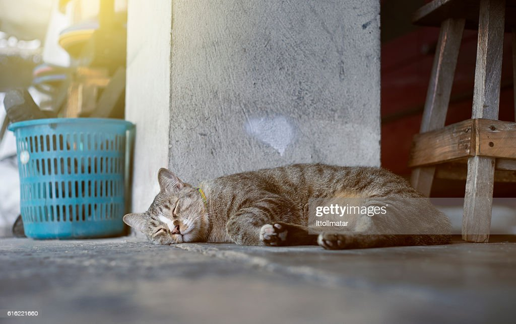 Sleeping cat : Bildbanksbilder