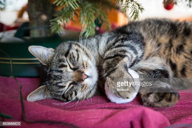 sleeping cat under a christmas tree