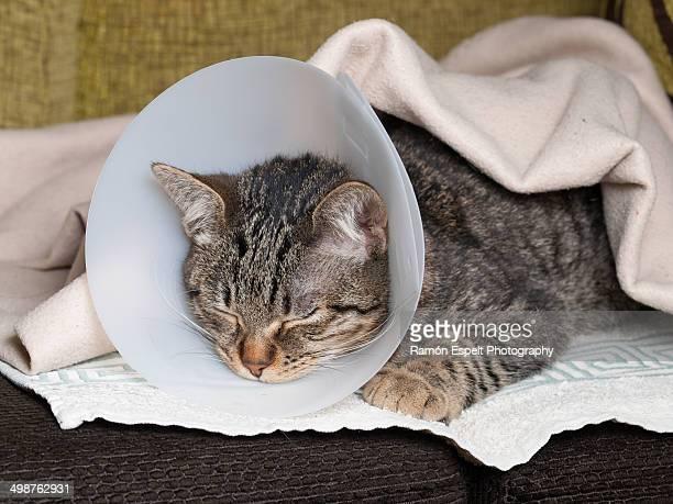 sleeping cat with an elizabethan collar - elizabethan collar fotografías e imágenes de stock