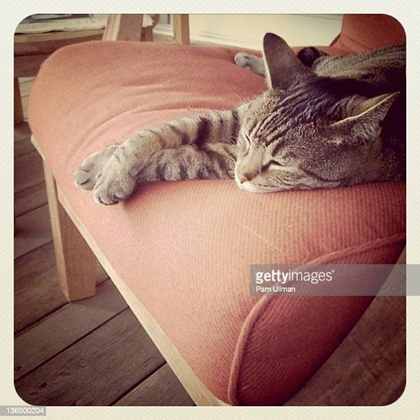 Sleeping cat with crossed paws