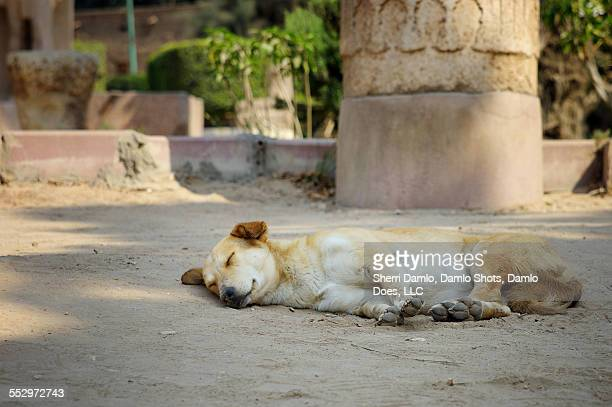sleeping dog in egypt - damlo does fotografías e imágenes de stock