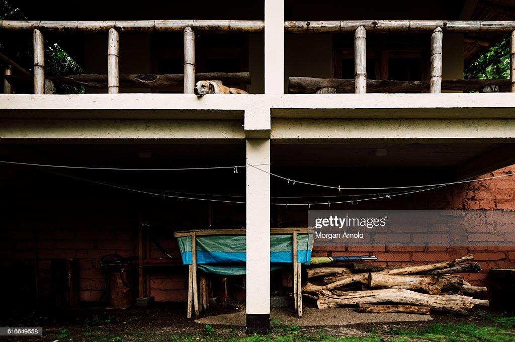 A sleeping dog on a balcony over a storage area : Stock Photo