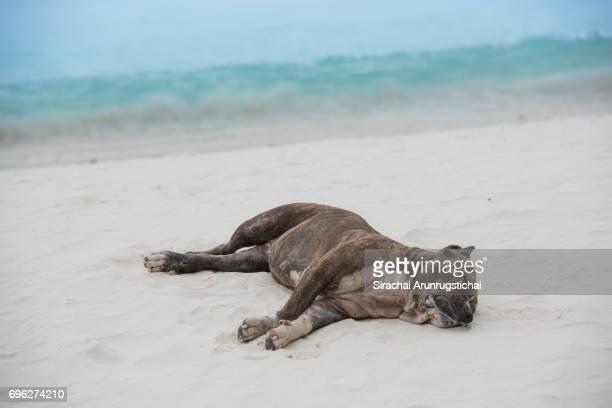Sleeping dog on sandy beach