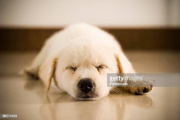 犬用ベッド
