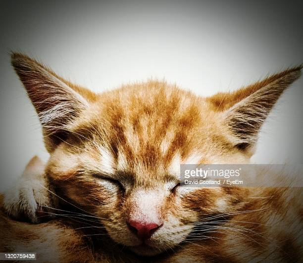 sleeping kitten - portsmouth england stock pictures, royalty-free photos & images