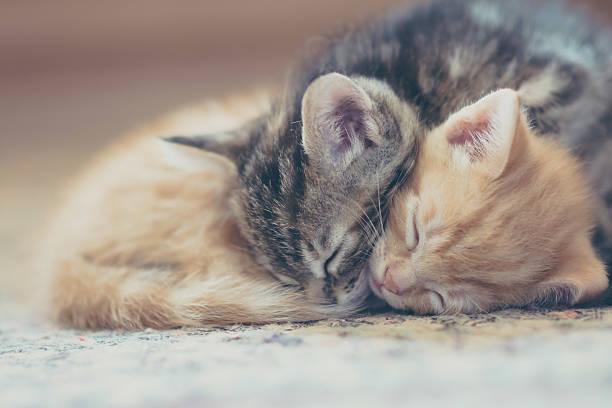 Sleeping Kittens Wall Art