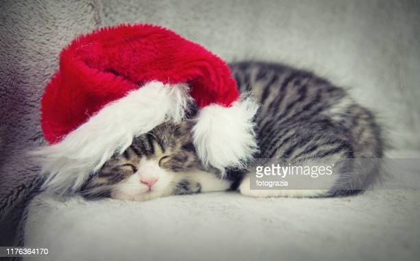 sleeping little kitty wearing santa's hat - christmas kittens stock pictures, royalty-free photos & images
