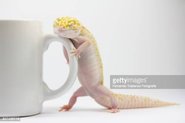 Sleeping lizard standing holding a cup of coffee
