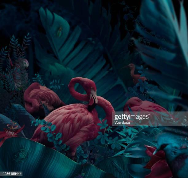 schlafende rosa flamingos - surreal stock-fotos und bilder