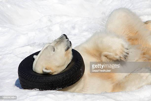 sleeping polar bear with tyre. - ijsschots stockfoto's en -beelden