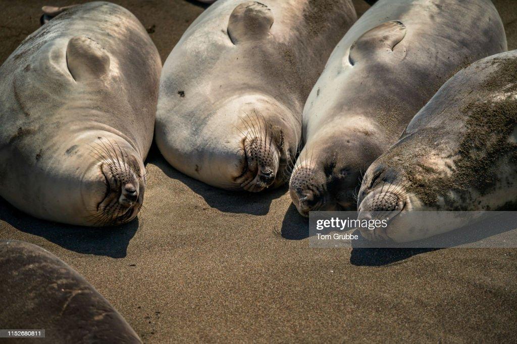 Sleeping Siblings : Stock Photo
