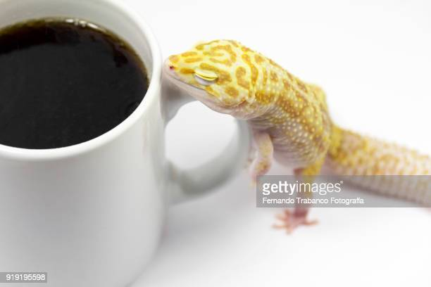 Sleepy animal with a cup of coffee