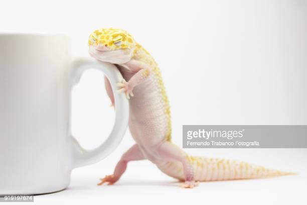 Sleepy animal with a cup of coffee