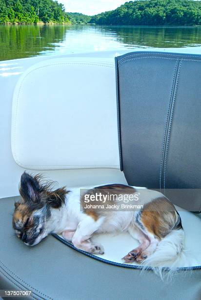 sleepy dog in boat - lake of the ozarks stock pictures, royalty-free photos & images