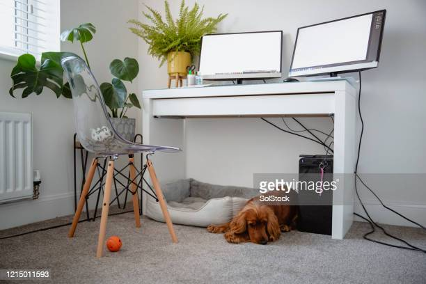 sleepy dog - carpet stock pictures, royalty-free photos & images