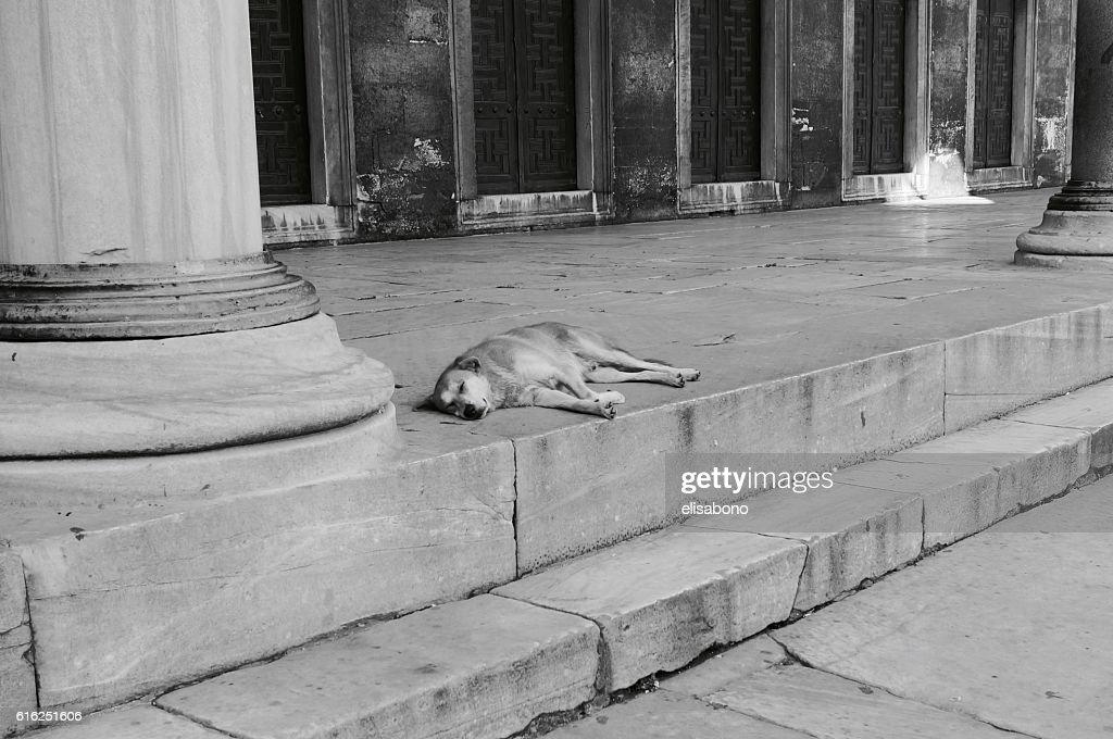 Cão com sono : Foto de stock