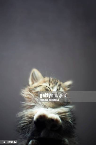 a sleepy kitten is photographed from below through a transparent background. - feet torture stock pictures, royalty-free photos & images