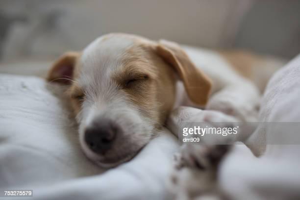 Sleepy Pets