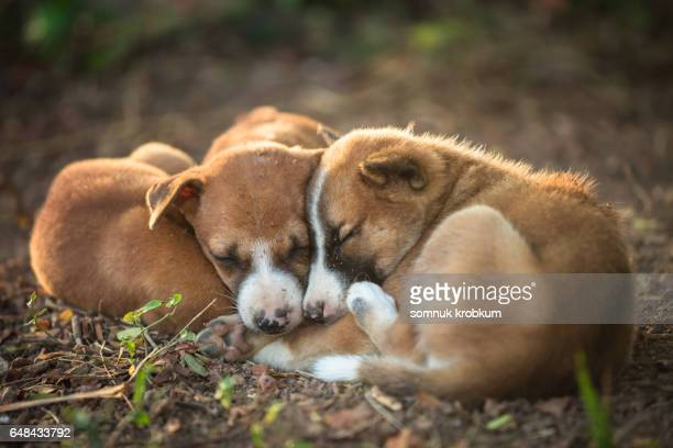 sleepy puppy - hot nurse stock photos and pictures