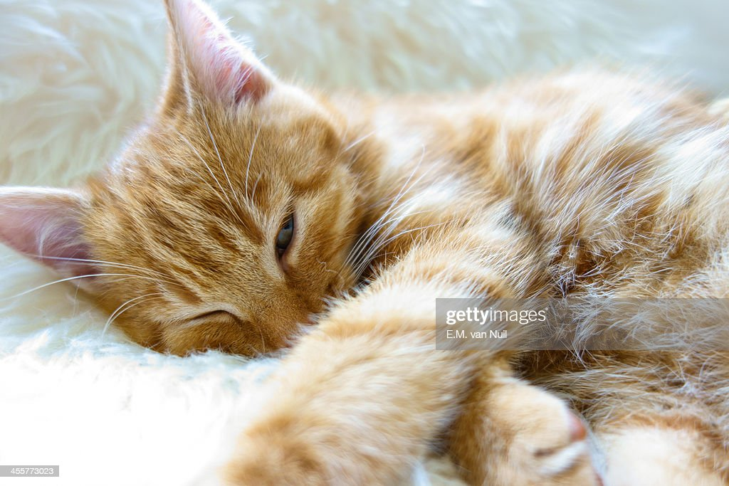Sleepyhead : Stockfoto