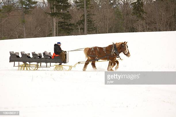sleigh and horses - shire horse stock pictures, royalty-free photos & images