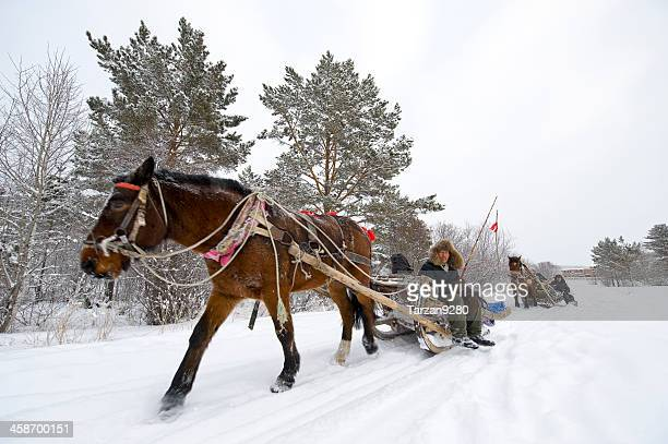 sleigh draught by horse in northeast of china - heilongjiang province stock pictures, royalty-free photos & images