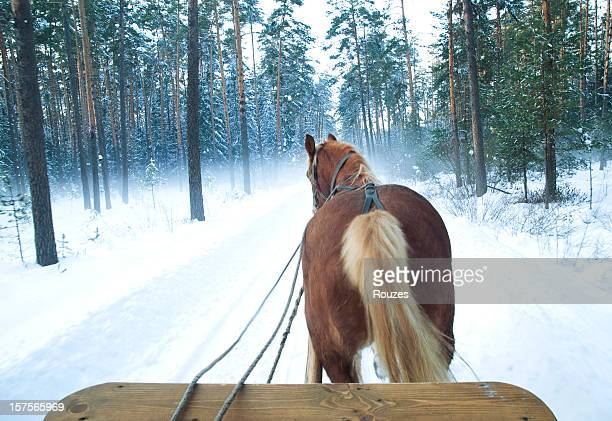 sleigh horses - rein stock pictures, royalty-free photos & images